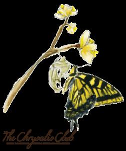 chrysalis_logo_trans-bg_web